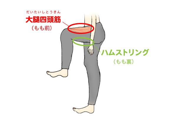 大腿四頭筋とハムストリングの説明図解
